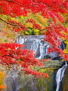 袋田の滝🍁の写真・画像素材[1597587]