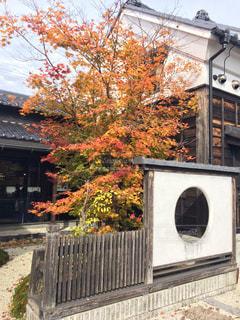 自然,秋,紅葉,喫茶店