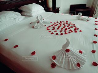 バラのベッドでこんにちはの写真・画像素材[1584918]