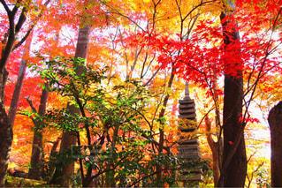 自然の色使いの写真・画像素材[1612131]