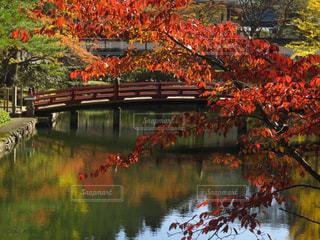 橋,紅葉,屋外,川,笑顔,高野山