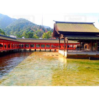秋,紅葉,赤,旅行,広島,宮島,厳島神社,もみじ狩りツアー,紅葉ツアー