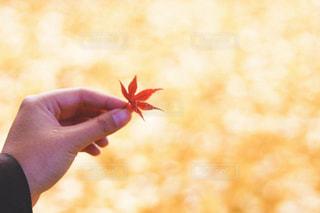 花を持っている手の写真・画像素材[1622097]