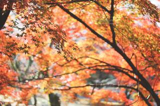 近くの木のアップの写真・画像素材[1638220]