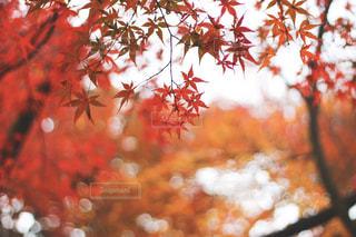 近くの木のアップの写真・画像素材[1641154]
