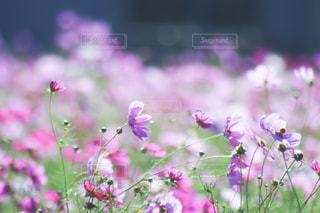 植物にピンクの花の写真・画像素材[1791277]