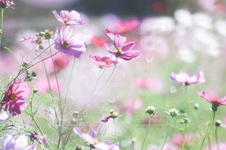 植物にピンクの花の写真・画像素材[1791279]