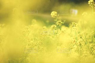 近くの植物のアップの写真・画像素材[1841608]