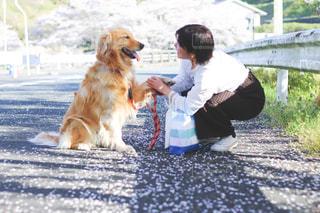 犬の写真・画像素材[2007094]