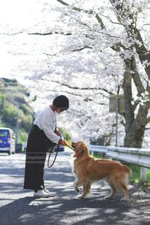 犬の写真・画像素材[2007099]