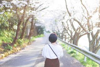 木の隣を歩く人の写真・画像素材[2277214]