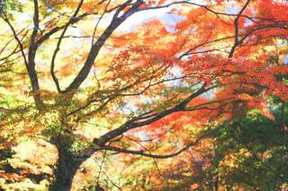 木のクローズアップの写真・画像素材[3803798]