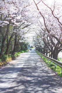 木の側に木がある道の写真・画像素材[4109304]