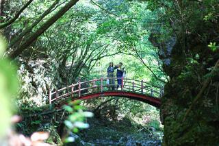 森の川に架かる橋の写真・画像素材[4110484]