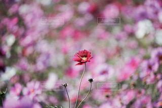 植物の上のピンクの花の写真・画像素材[4337776]