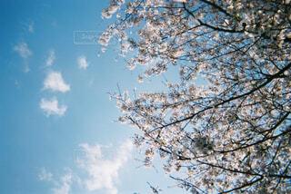 木のクローズアップの写真・画像素材[4337780]