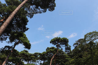 風景,空,木,屋外,青空,山,景色,樹木,未来,ポジティブ,草木,針葉樹