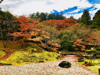 秋,紅葉,赤,青空,落ち葉,庭園,旅行,松島,宮城