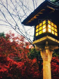 自然,秋,紅葉,赤,ライト,旅行,香川,こんぴらさん,金比羅