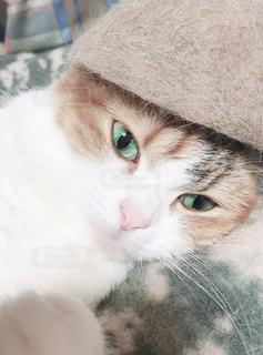 近くに猫のアップの写真・画像素材[1622188]