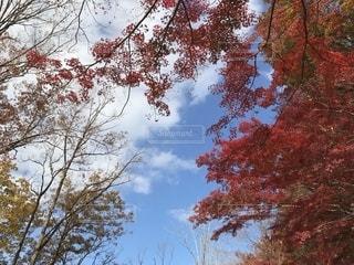 近くの木のアップの写真・画像素材[1647693]