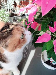 花の上に座っている猫の写真・画像素材[1653427]
