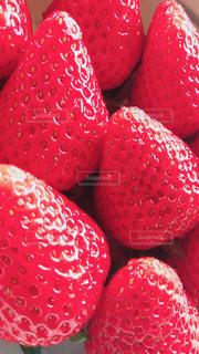 近くに赤い果実のの写真・画像素材[1763878]