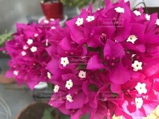 近くの花のアップの写真・画像素材[1794365]