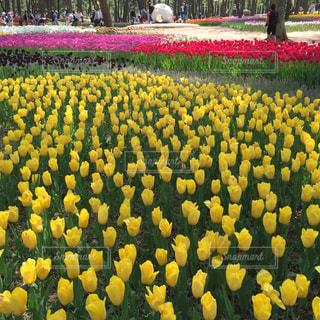 黄色の花の束の写真・画像素材[1824752]