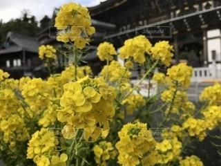 黄色い花の上に座って花の花瓶の写真・画像素材[1824791]