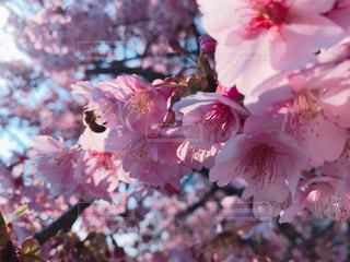 近くの花のアップの写真・画像素材[1832114]