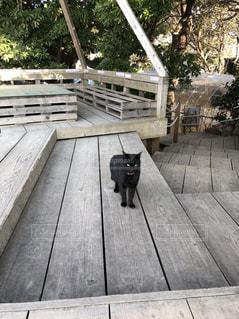 猫の写真・画像素材[2147221]