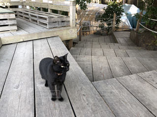 猫の写真・画像素材[2147228]