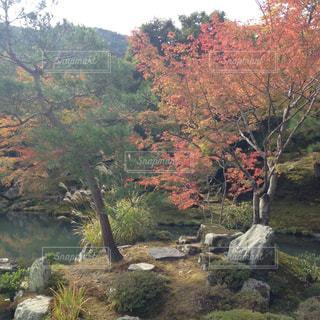 紅葉,木,京都,緑,赤,池,樹木,庭園,関西,草木