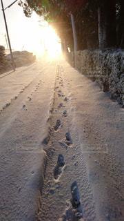 自然,風景,冬,雪,屋外,太陽,白,道,早朝,通り,ホワイト