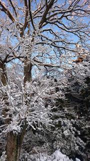 自然,冬,雪,屋外,白,景色,樹木,ホワイト,草木