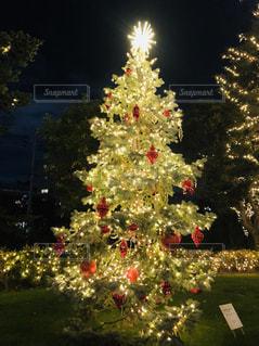 クリスマスツリーの写真・画像素材[1680251]