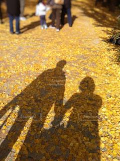 銀杏並木と影の写真・画像素材[1592518]