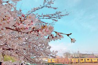 空,花,春,屋外,電車,晴れ,樹木,桜の花,さくら,西武新宿線