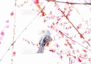 春のさえずりの写真・画像素材[1930771]