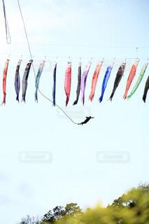 こいのぼりと空中遊泳の写真・画像素材[3012920]