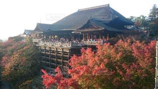 清水寺,紅葉,屋外,京都