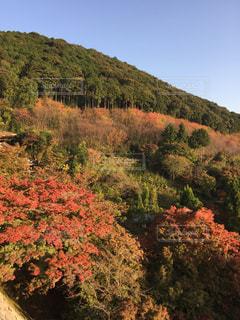 紅葉,屋外,京都,山