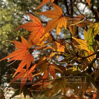 植物の木の成長の写真・画像素材[1629602]