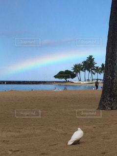 海,ビーチ,雲,砂浜,虹,未来,ハワイ,鳩,海外旅行,ホノルル,夢,幸せの象徴,叶えたい