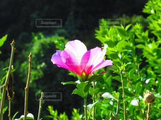 風景,花,ピンク,景色,光,癒し,未来,夢,ポジティブ,希望,目標,可能性