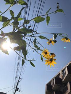空,花,屋外,太陽,黄色,光,お日様,草木,フォトジェニック