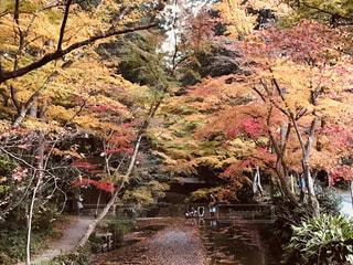 森を流れる川の写真・画像素材[1652360]