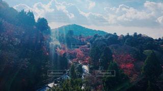 自然,秋,清水寺,紅葉,京都,清水,12月,モミジ,京都市,東山区,子安塔