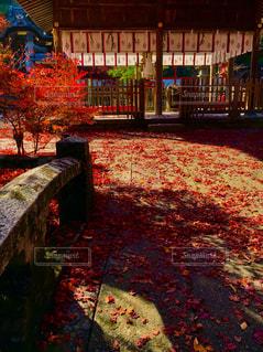 鍬山神社の紅葉の写真・画像素材[1610156]